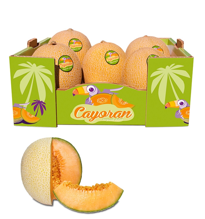 5 cayoran melons in deluxe box